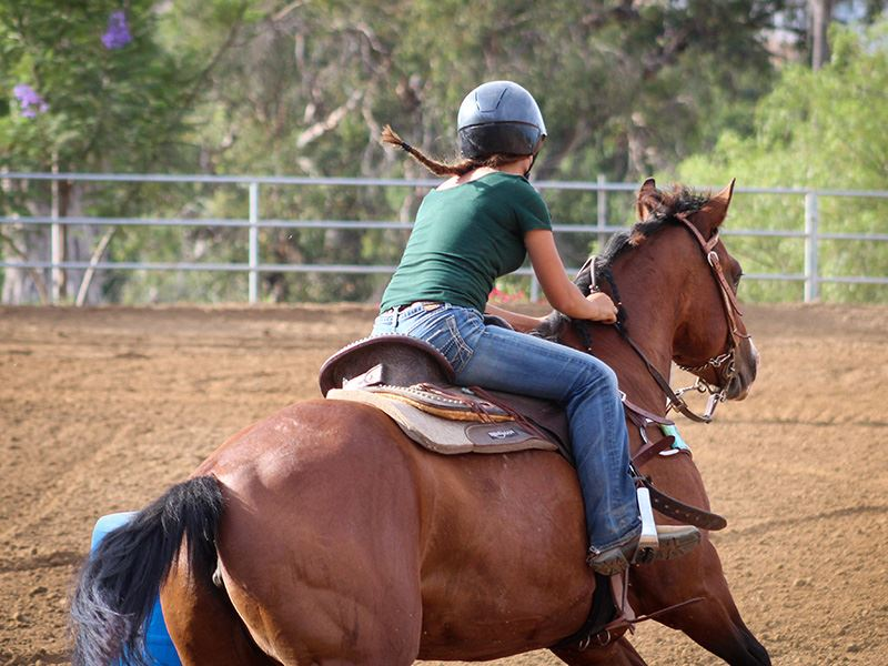 Importance of Sturdy Horse Arena Footing