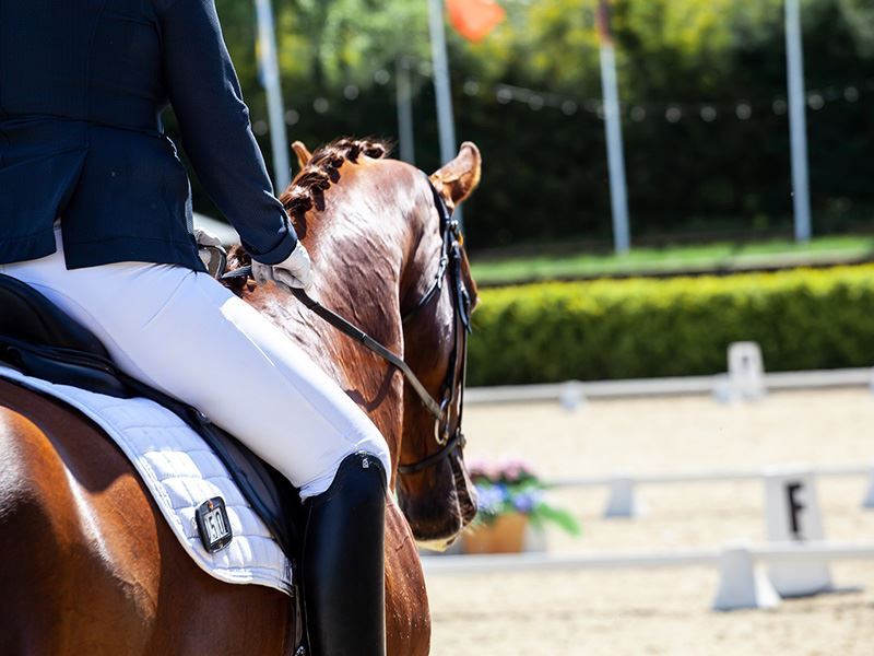 Horse Arena Footing Options