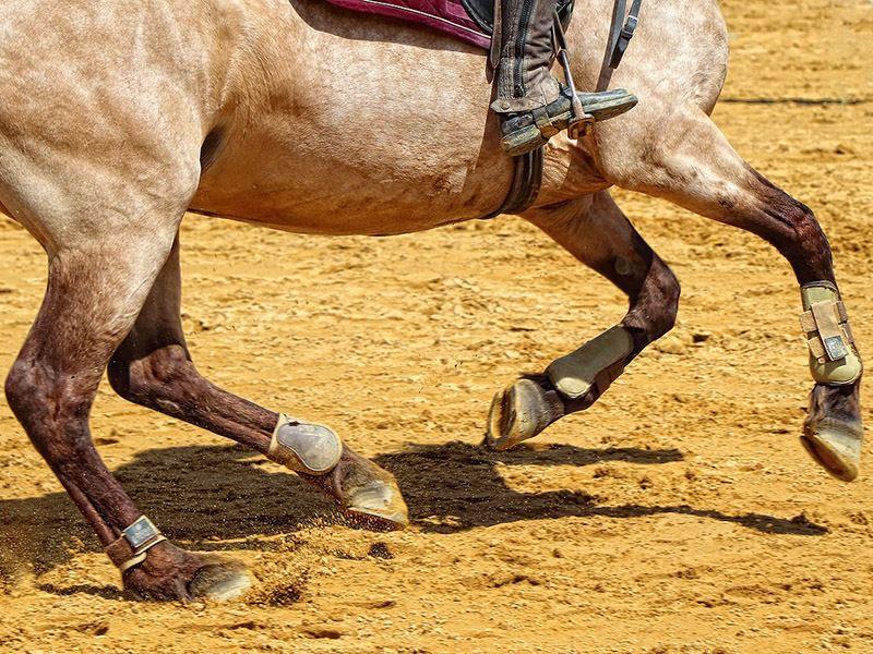 Horse Racing Arena Footing